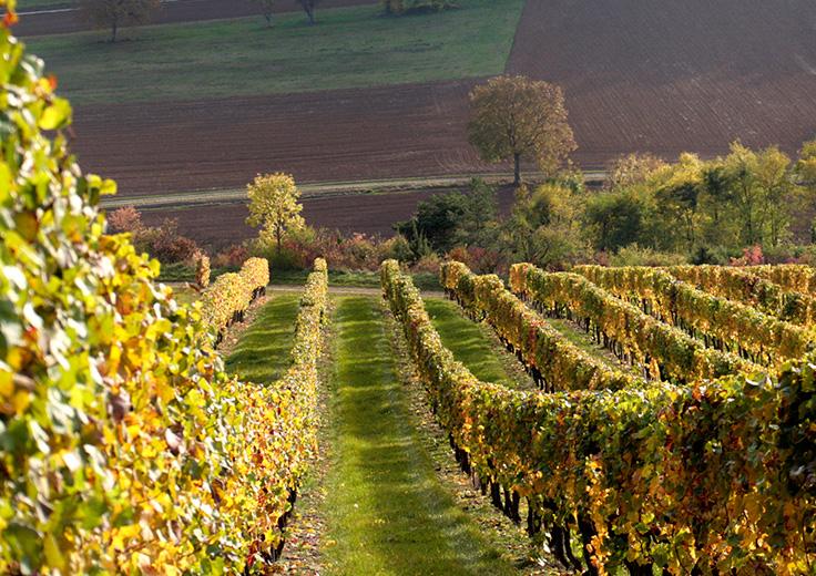 Dégustation de vins de Bourgogne