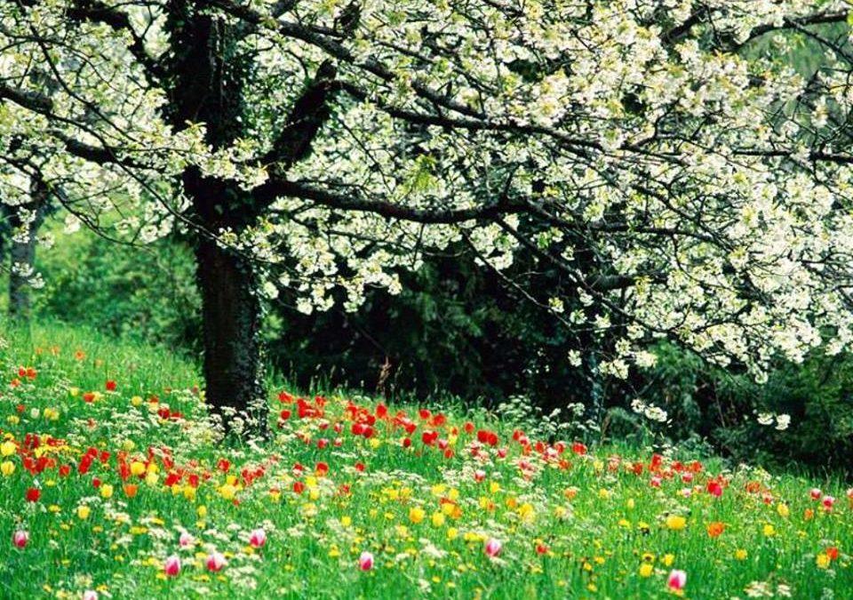 La grande dégustation de printemps | Samedi 27 avril 2019