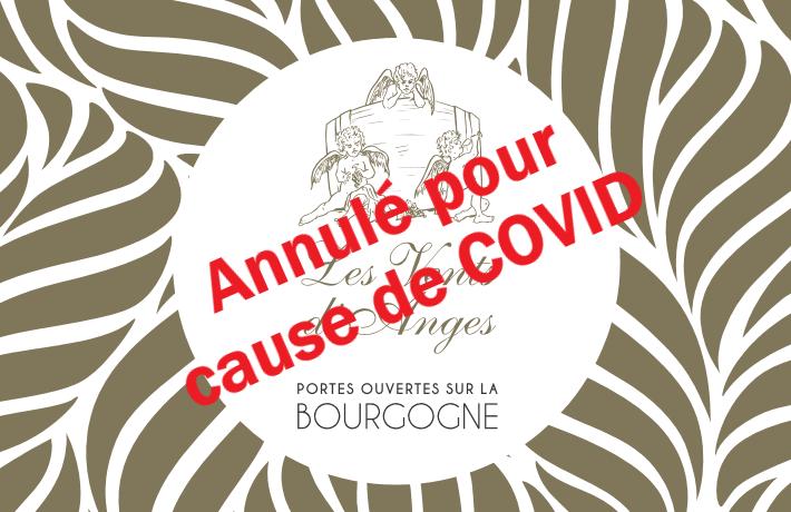 Dégustation de vins de Bourgogne | Annulé !